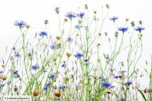 Florascapes_9104