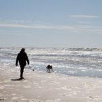 Strandwandeling met hond | Fotografie Judith den Hollander