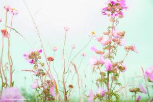 Florascapes   Autonomous photo project by Judith den Hollander