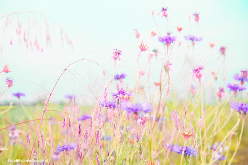 Florascapes, personal work from portrait photographer Judith den Hollander.