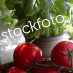 Stockfoto_Tomaten-Basilicum | Stock photo Tomatoes and Basil.