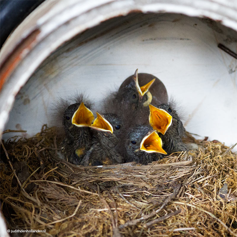 Family Portrait | Angry birds | Photography by Judith den Hollander