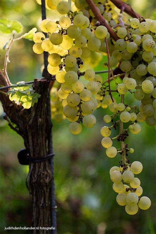 wijndomein017judithdenhollander