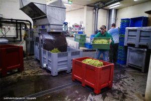 Kneuzen en onstelen | De voorbereiding van de wijngisting | Wijnkelder St. Martinus - Vijlen.