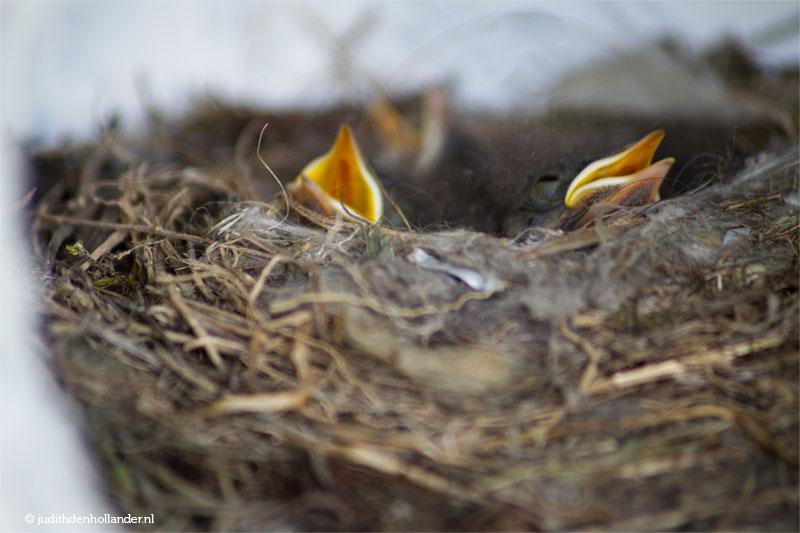 Birds nest | Vogelnest