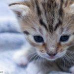 Dierenportretjes | Schattige kittens 2 weken jong.