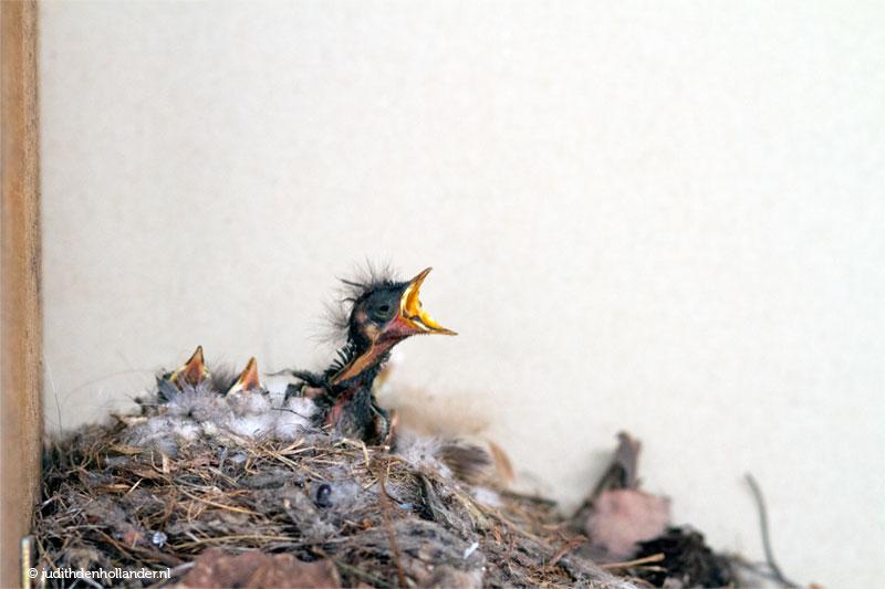 Vogelnest in de werkplaats | Fotografie Judith den Hollander.